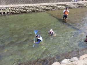小駄良川で魚取り